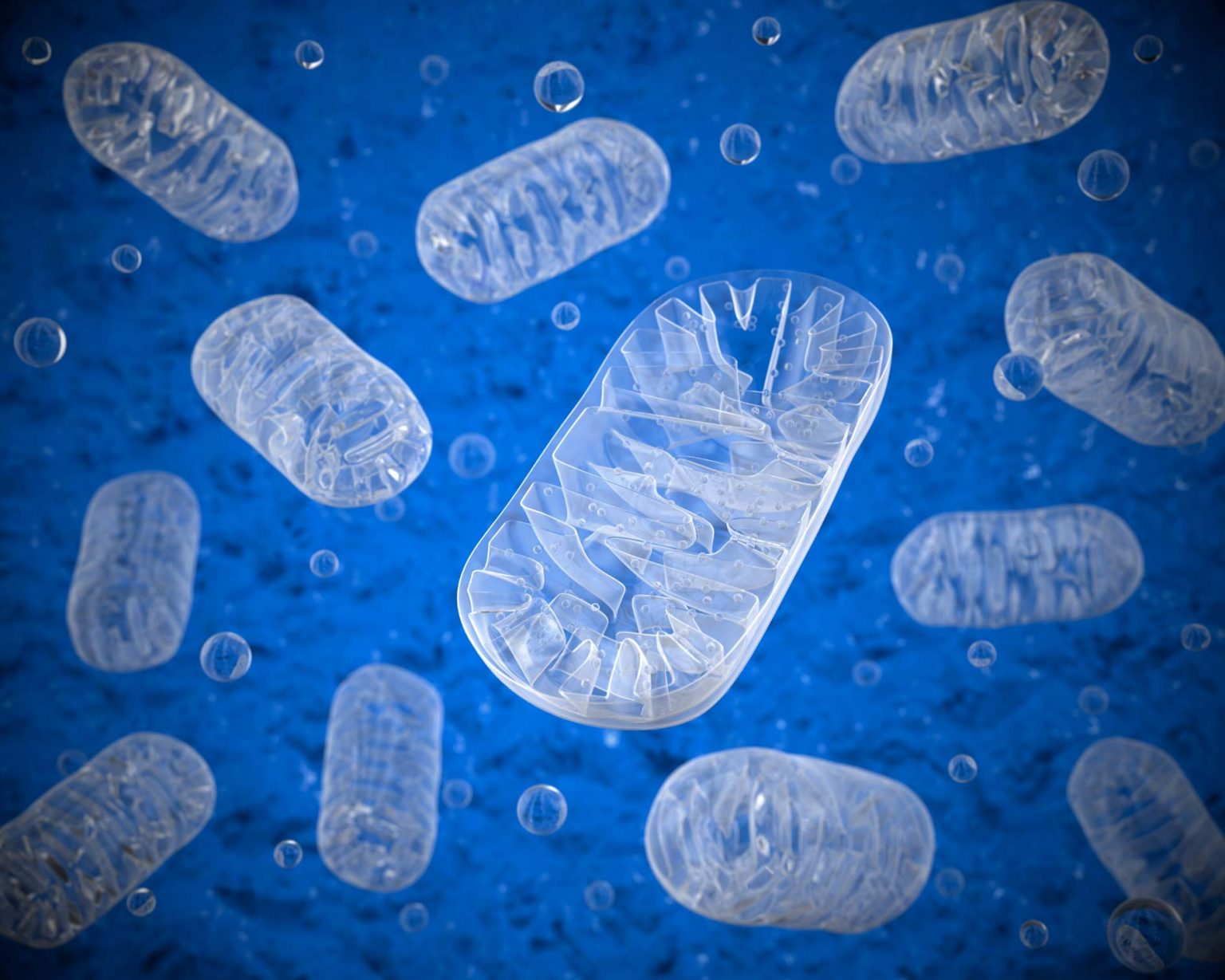 Supporting your mitochondria May be the most important long term health decision you make.